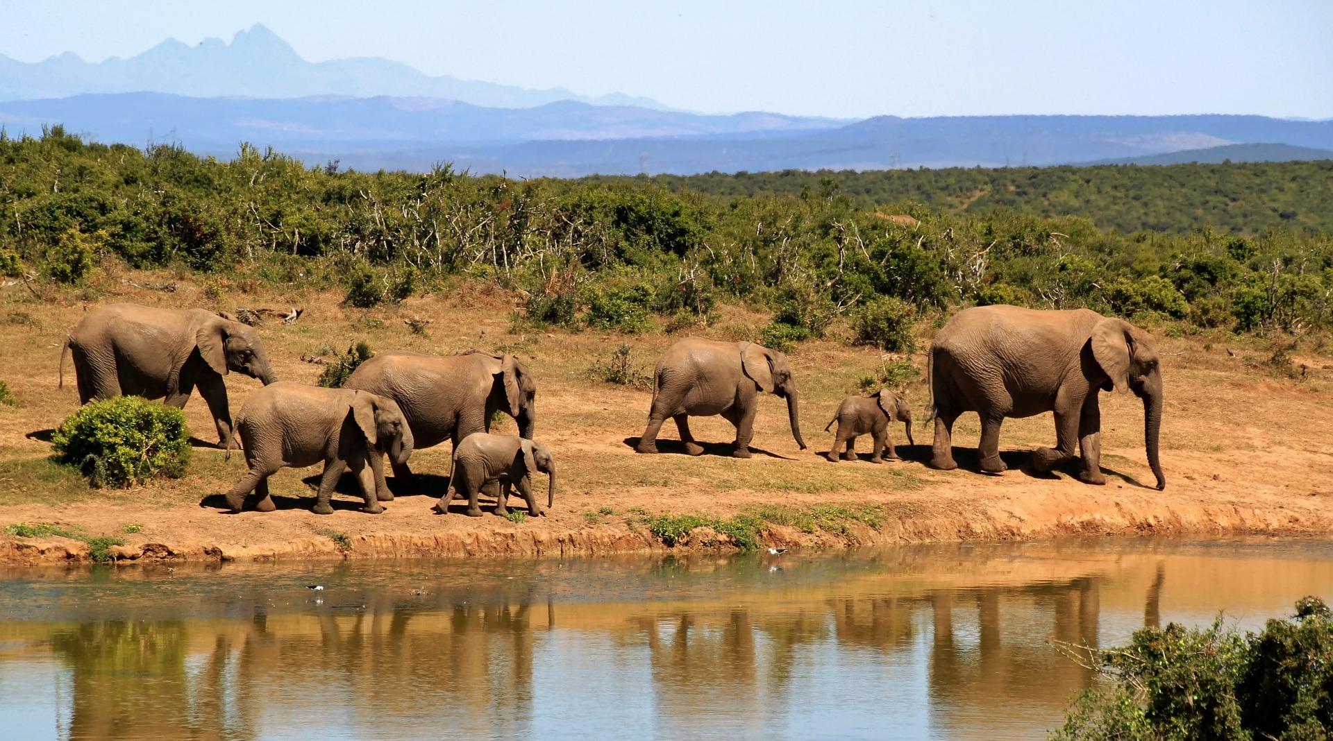 Santuarios de elefantes en Tailandia