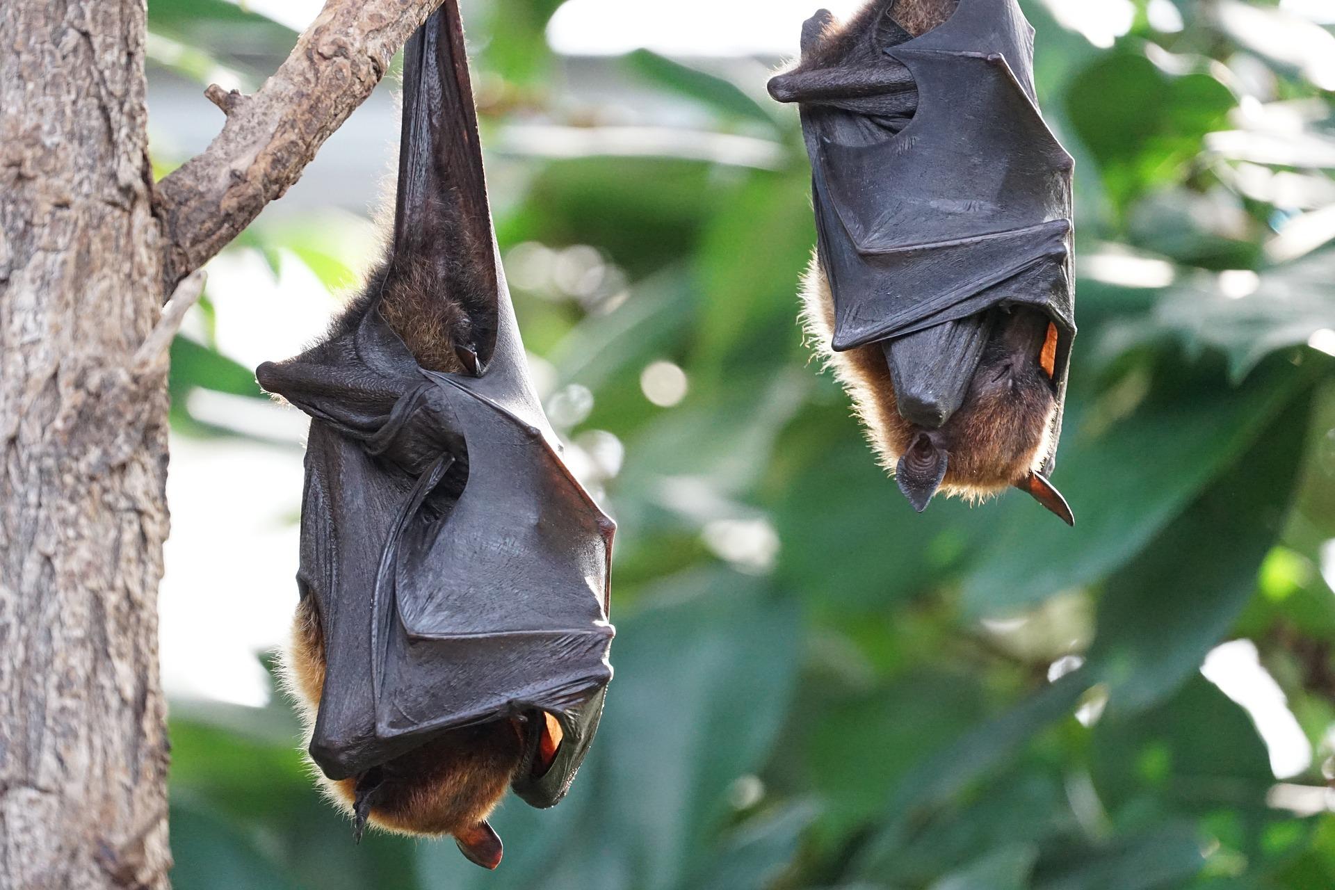 Templo de los murciélagos en Bali