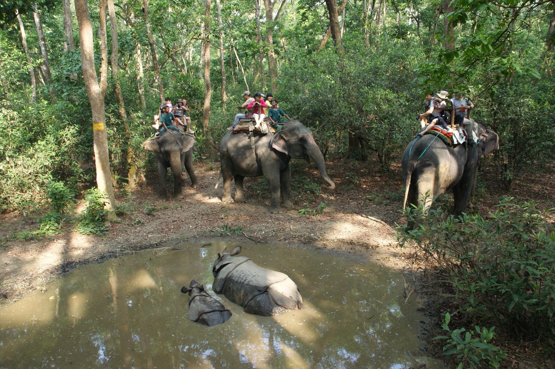 Los santuarios de elefantes en Tailandia