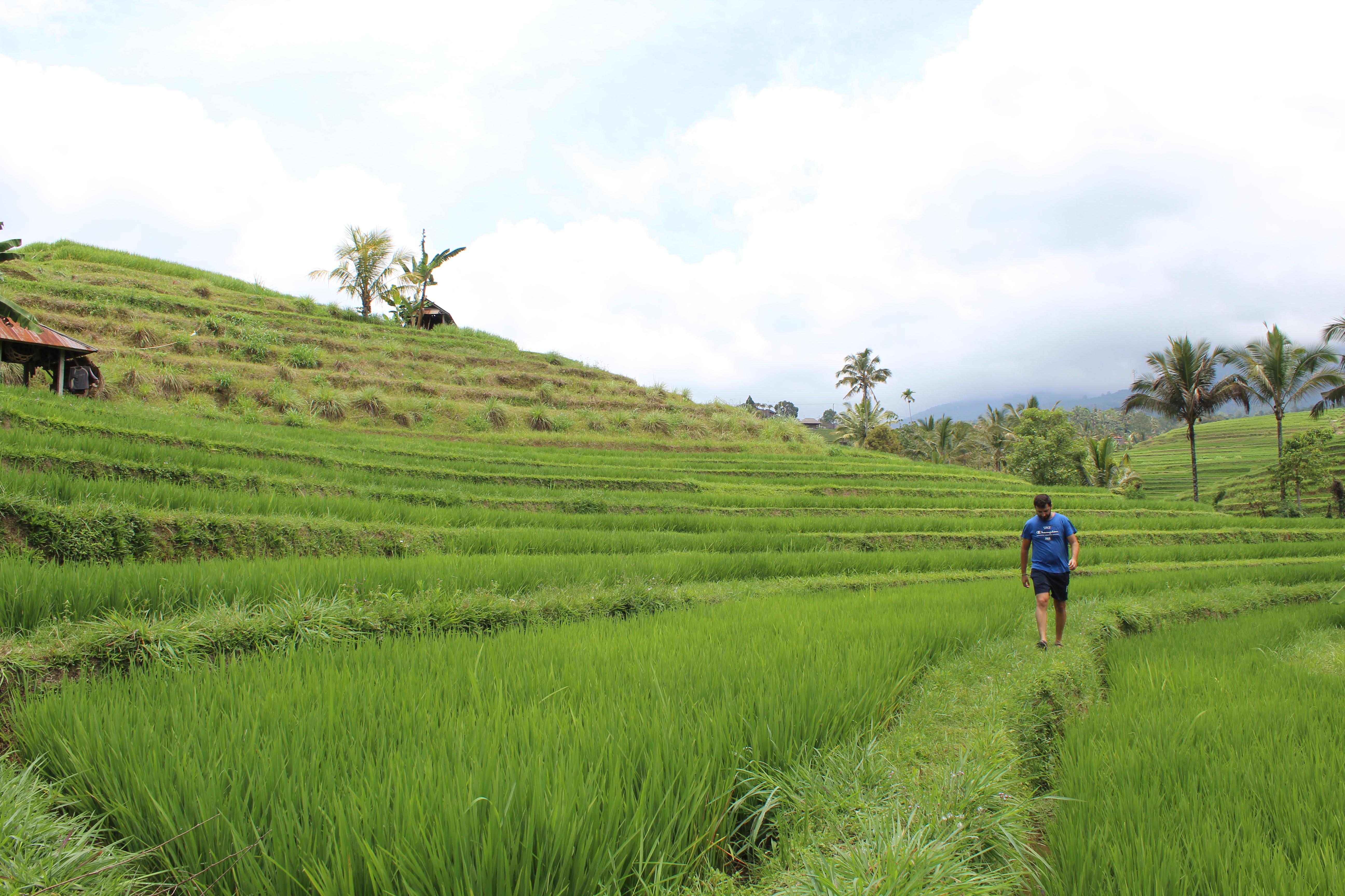 Los arrozales de Jatiluwih