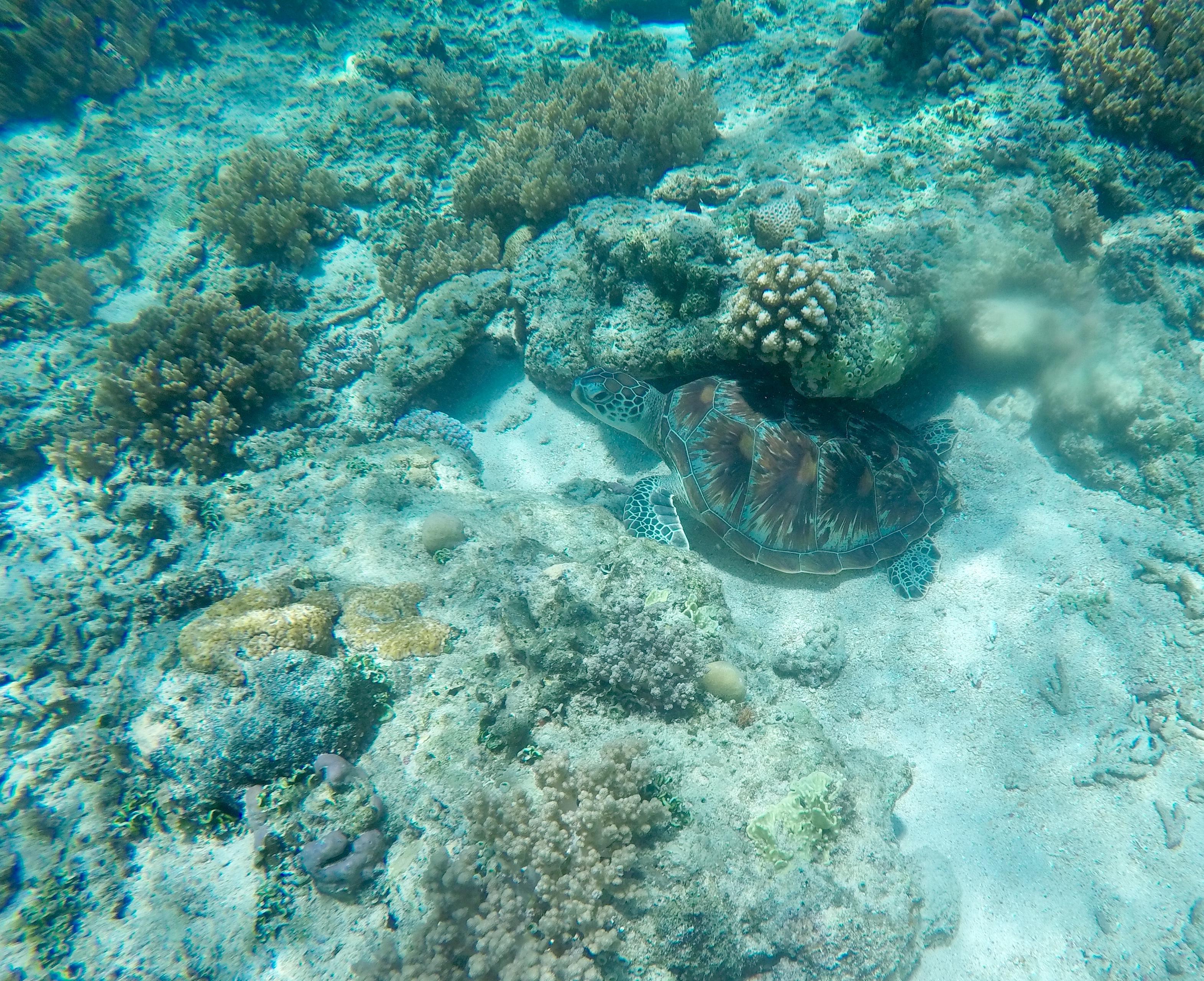 Snorkel en Gili Trawangan